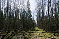 Forest between Olgino and Lisy Nos, 2nd of May 2020-3.jpg