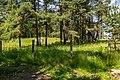 Forest in Minsk (June 2020) 5.jpg