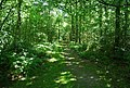 Forest track, Oldbury Woods - geograph.org.uk - 856805.jpg