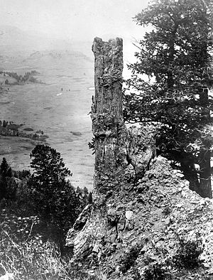 Specimen Ridge - Image: Fossil Tree Specimen Ridge YNP1890