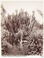 Fotografi av Giardino dell'Albergo des Palmes. Palermo, Italien - Hallwylska museet - 106726.tif