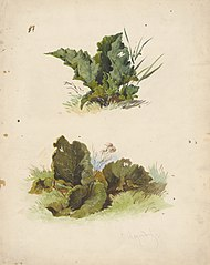 Study of Broadleaved Plants