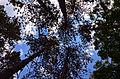 Fruška Gora National Park03.jpg