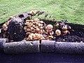 Fungi X2 - geograph.org.uk - 1065821.jpg