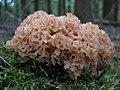 Fungus-IMG 3248.JPG