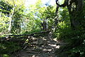 Główny Szlak Beskidzki - Path to Smerek 09.jpg