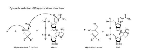 Glycerol-3-phosphate dehydrogenase - Wikipedia