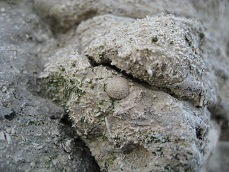 Cliffs of Sangstrup - Close up of clint wall with several fossils