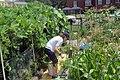 Gardener (19847742399).jpg