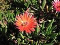 Gardenology-IMG 5177 hunt10mar.jpg