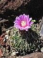 Gardenology-IMG 5205 hunt10mar.jpg