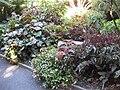 Gardenology.org-IMG 1241 rbgs10dec.jpg