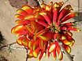 Gardenology.org-IMG 4328 hunt0904.jpg