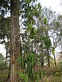 Gardenology.org-IMG 7250 qsbg11mar.jpg