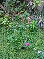 Gardens in Baghdad 84.jpg