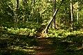 Garphyttan NP forest path.jpg