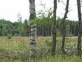Gask Wood, near Garlogie - geograph.org.uk - 30424.jpg