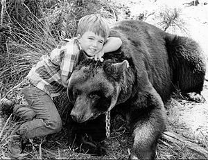 "Gentle Ben - Clint Howard as ""Mark Wedloe"" with Bruno the Bear as ""Ben"" in 1967"