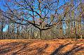 Gfp-missouri-babbler-state-park-tree-at-hilltop.jpg