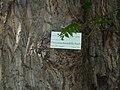 Giardino botanico di Brera (Milan) 175.jpg