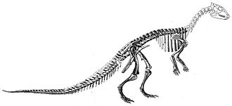 Timeline of United States discoveries - Charles Gilmore's reconstruction of Thescelosaurus in 1915.