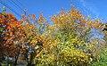 Glare of autumn. September 2015. - panoramio.jpg