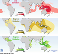 Global distribution of coral, mangrove, and seagrass diversity.png