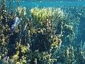 Glover's Reef 2-14 (33297578885).jpg