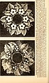 Godey's lady's book (1840) (14582771309).jpg