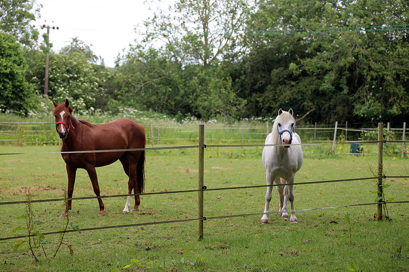 File:Good Easter, Essex, England ~ horse and pony in paddock 02.JPG