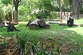 Gorilas Zoo-Botânica de Belo Horizonte.jpg