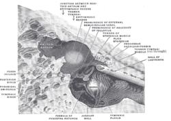 ANTRUM+MASTOIDEUM