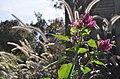 Green Spring Gardens in October (22399273859).jpg