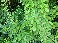 Greenwood forest farming 15.JPG