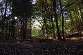 Grundschöttel Wald nördlich Im Hillingschen 2009.jpg