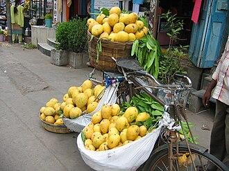 Benishan (Mango) - Banganpalli mangoes being sold on a bicycle in Guntur City, Andhra Pradesh, India