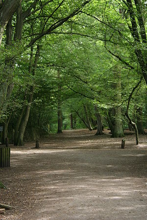 Highgate Wood - Highgate Wood in late July 2006