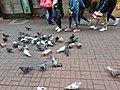HK 中環 Central 德輔道中 39 Des Voeux Road Central 德忌利士街 Douglas Street freedom pigeons December 2019 SS2 01.jpg