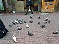 HK 中環 Central 德輔道中 39 Des Voeux Road Central 德忌利士街 Douglas Street freedom pigeons December 2019 SS2 08.jpg