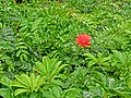 HK Hung Hom South Road Rest Garden 紅磡南道休憩花園 green plant n red flower Mar-2013.JPG