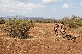Hadza people - Two men returning from a hunt.