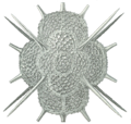 Haeckel Radiolarian detail.png