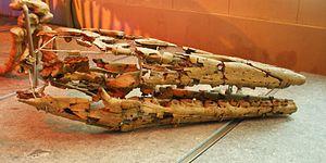 Hainosaurus - Skull, Natural History Museum of Bruxelles