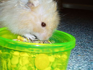 My hamster, Biscuit (Nov 2005-15th April 2008)...