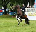 Hans-Dieter Dreher Pferd Magnus Romeo verweigert Hindernis Pferd International 2011.JPG