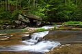 Hawksnest-wv-spring-mill-creek-waterfalls - West Virginia - ForestWander.jpg