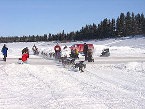 Hay River, Northwest Territories - Dog sledding at the Hay River Winter Carnival