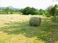 Hay bales near Meerbrook - geograph.org.uk - 198561.jpg
