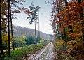 Herbstwald04.jpg