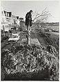 Het verwijderen van tien lindenbomen. NL-HlmNHA 54031985.JPG